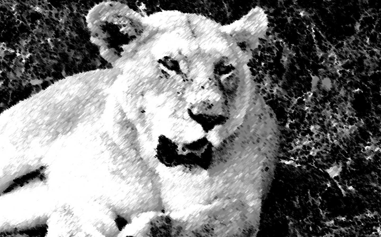 Smoky Lion- Kenya - Digital Art - Graphic Designs at JNB Studio size
