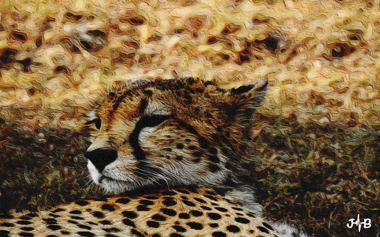Confident Cheetah